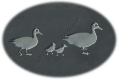 duck-family